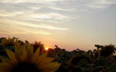 A nyár tizenhét pillanata; 15